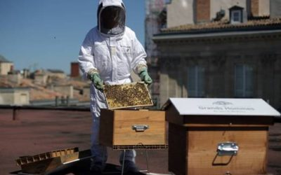 Le miel des Grands Hommes – la biodiversité au cœur de nos centres